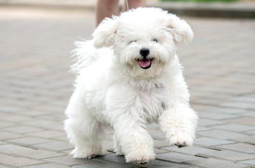 Ras Anjing Yang Paling Penuh Kasih Sayang 1