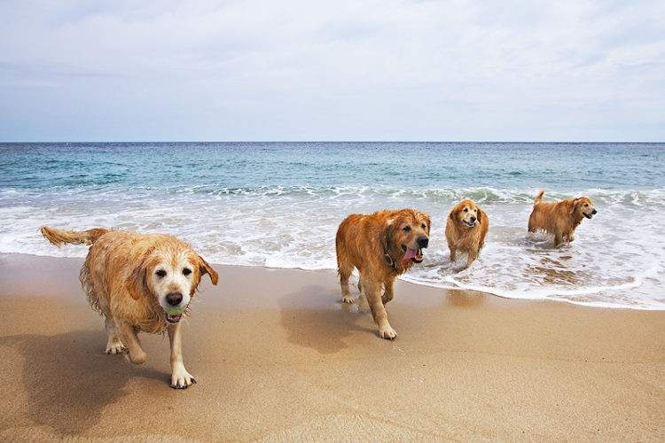 Todos Los Perros Pueden Ir A Todas Las Playas